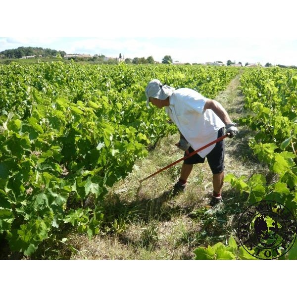 Red Wine Organic And Sulfite Free Domaine Louis Julian