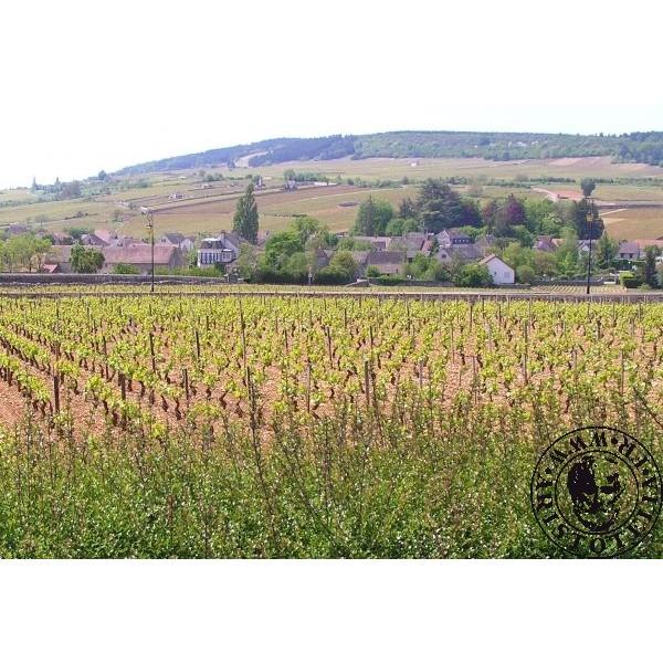 White Wine Magnum Meursault  U0026quot Luchets U0026quot  2004 Domaine Roulot